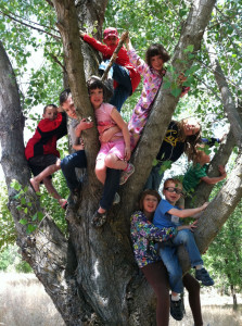 KIDS IN TREE AT WOODFLOCK
